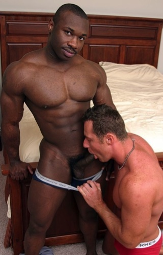 White stud sucking a huge hard black cock