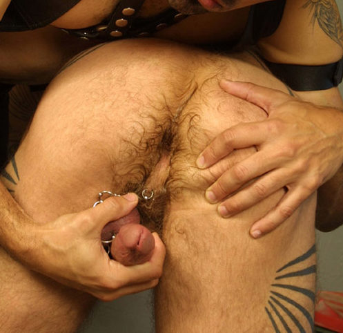 Bud Hole – Ass