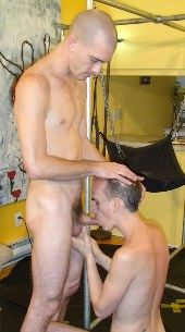 Shaved-head guy getting his cock sucked.