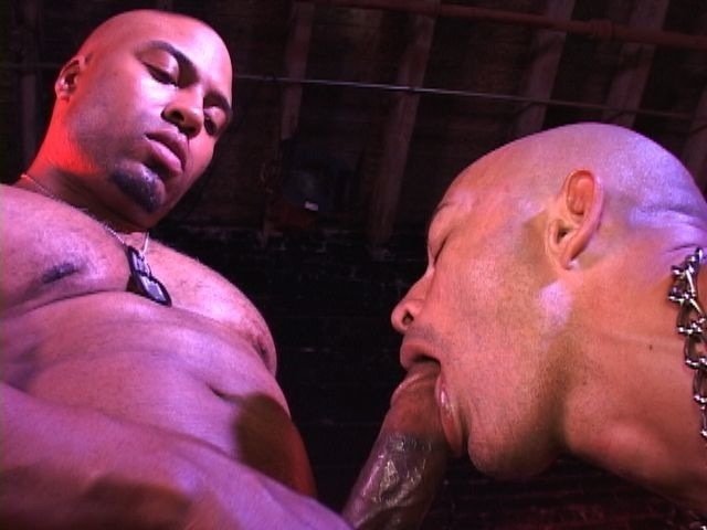 Beefy bald stud getting his cock sucked
