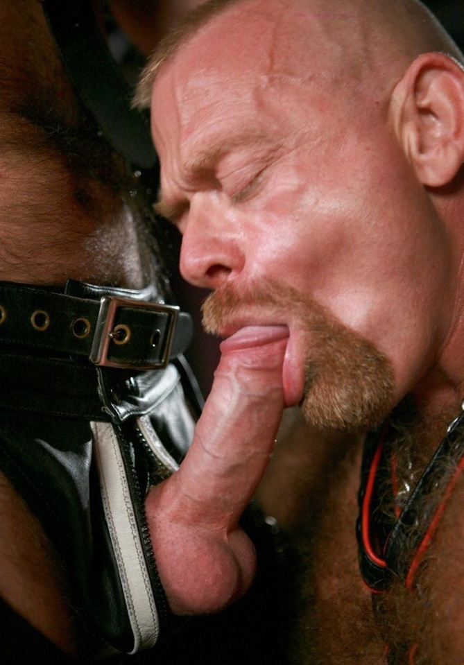 Ginger bear Rob Thomas sucking dick